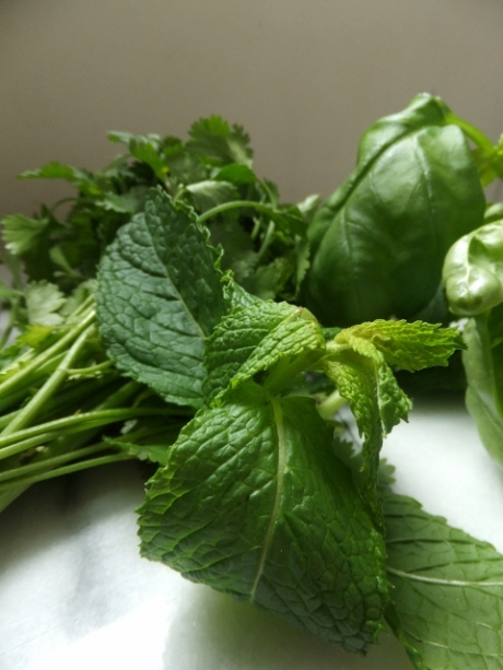 fresh herbs - coriander, basil and mint