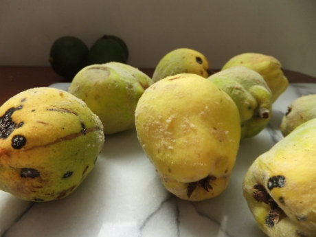 Quince and avocado