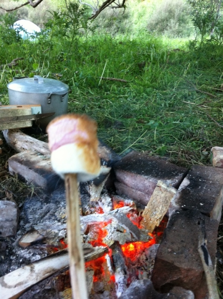 Marshmallows on sticks
